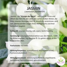 """Jasmine – la """"Regina della notte"""" – seduce i sensi e apre il cuore per … Aroma Diffuser, Oil Diffuser, Esential Oils, Doterra Oils, Young Living, Alternative Medicine, Natural Healing, The Ordinary, Aromatherapy"""