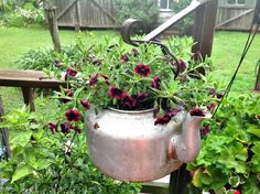 Two Women and a Hoe™     RECYCLED tea kettle overflowing with Superbells® Blackberry Punch! Thanks Carmen! ✿✿✿