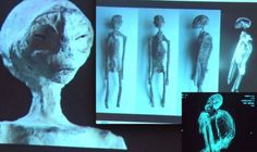 """EXCLUSIVE: The latest DNA test results carried out on """"three-fingered mummified"""" bodies said to have been found in a tomb in Peru have suggested they may not be human, it has been sensationally claimed."""