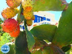Urlaub-in-Griechenland-Kreta - Zorbas Island apartments in Kokkini Hani, Crete Greece 2020 Heraklion, Crete Greece, Island, Breakfast, Bed, Greece Style, Morning Coffee, Stream Bed, Islands
