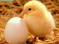 http://animalesraros.org/wp-content/uploads/2013/02/Animales-3.jpg