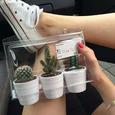 6 Prosperous Cool Tricks: Minimalist Home Tour Love minimalist bedroom boho kids.Minimalist Home Wood White Kitchens minimalist home wood etsy.Minimalist Home Art White Walls. Decoration Ikea, Plant Aesthetic, Boho Aesthetic, Aesthetic Grunge, Plants Are Friends, Cactus Y Suculentas, Cacti And Succulents, Cactus Plants, Small Cactus