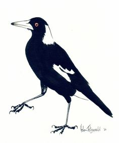 magpie prints ceramic - Google Search Magpie Tattoo, Drypoint Etching, Beginner Art, Blue Horse, Bird Artwork, Australian Animals, Botanical Drawings, Bird Drawings, Watercolor Animals