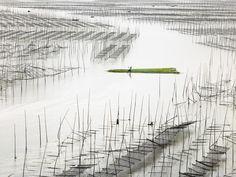 go4photos:  Seaweed farm by ThierryBornier