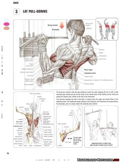 Training Anatomy - Back - Lat Pull-Downs