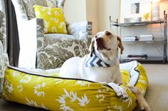 Modern Dog Beds | 3 Shades of Dog