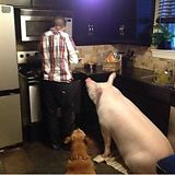 He thought he bought a micro pig - Imgur