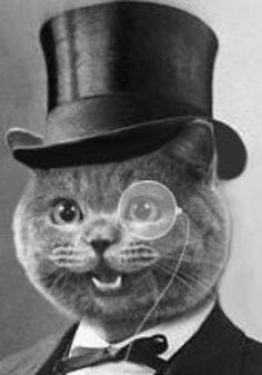 Monocle Cat Shant Stay But A Moment Just Popped By To Inquire If