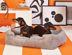 {doxies in bed} pet bed by Jax & Bones