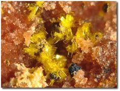 Phosphuranylite. La Dorgissière Mine, Saint-Amand-sur-Sèvre, Deux-Sèvres, Poitou-Charentes, France FOV=1.5 mm Photo Jean-Marc Johannet
