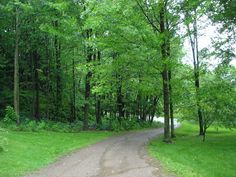 pictures of trees | the importance of trees to our quality of life requires that we ...