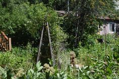 Gardens - So I Was Thinking High School Sweethearts, Marry Me, Paths, How To Find Out, Photo Galleries, Gardens, Gallery, World, Roof Rack
