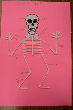 "Minus the pre-printed skull this is how we learned the skeletal system in my anatomy class in ""college."""