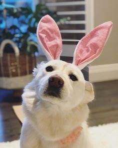 Coconut on Instagram: #cutepetshots #cuteanimalshots #petsoftheday #petslovers  #dogloversclub #dogloversonly #dogloversunite #dogloverforever #pupperdoggo #gooddoggo #cutedoggo #puppyfun #puppydaily #puppypic #puppyofinsta #puppydays #puppiesoftheday #puppiesdaily #puppieslover Animals And Pets, Cute Animals, Pupper Doggo, Dog Dresses, Cat Day, Best Dogs, Cats Of Instagram, Fur Babies, Cat Lovers