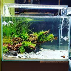 "312 Likes, 4 Comments - Sascha Hoyer (@sascha_hoyer_aquascaping) on Instagram: ""ADA 45p Workshop Showtank 3 weeks After Setup #ADA_Deutschland #european_aquaristics…"""