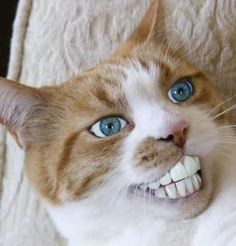 Yes, i like the dentist, a perfect fit...