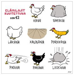 Eläinlajit how to learn Finnish easily and with humor . a hilarious… Learn Finnish, Finnish Words, Finnish Language, Joy And Happiness, How To Make Notes, Funny Facts, Funny Photos, Hilarious, Jokes
