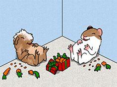 Cute guinea pigs enjoying Christmas
