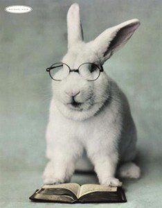 Troy - Our second nominee is a more serious bunny. He's clearly an intellectual. Bespectacled and with a very serious countenance, he's a bunny for those who aren't intimidated by more learned mammals who do more than chew on the pages of a good book. Baby Animals, Funny Animals, Cute Animals, Funny Bunnies, Cute Bunny, Bunny Bunny, Baby Bunnies, Easter Bunny, Biology Jokes