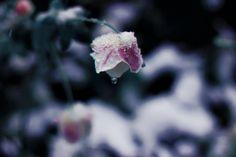 pure diamond by emmagucci