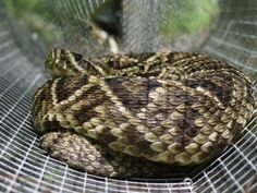 How to get rid of snakes? Our comprehensive snake repellent guide provides snake control ideas for this question common among homeowners. Snake Repellant, Snake Free, Snakes, Fence, Gardening, Conservation, Farming, Bugs