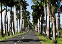 Allée des Cocotiers - Guadeloupe