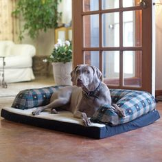 """Baxter Couch Bolster Dog Bed Color: Teal Paw Plaid, Size: Large (40"""" L x 30"""" W)"""