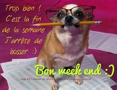 week end quotes pictures \ week end quotes & week end quotes funny & week end quotes hello weekend & week end quotes happy & week end quotes funny happy weekend & week end quotes pictures Funny Dog Captions, Funny Baby Memes, Funny Quotes For Kids, Funny Memes About Girls, Funny Puns, Funny Babies, Hilarious, Super Funny Pictures, Funny Pictures With Captions