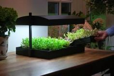 OF DEZE!!  http://www.tuinadvies.be/shop/product.php?id=666