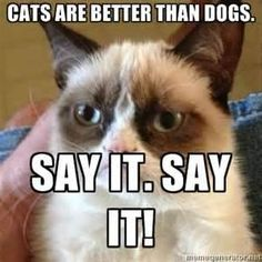 I love dogs and cats tho.... Can I say I love both? Grumpy cat-no Me- T-T