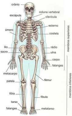 Ossos do Corpo Humano Medicine Notes, Medicine Student, Human Body Anatomy, Study Organization, Medical Anatomy, School Motivation, Study Inspiration, Anatomy And Physiology, Medical Students