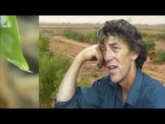 Geoff Lawton grow a Food forest in the middle of the desert