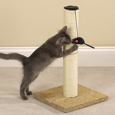 Meow Town Scratch N Stow Cat Scratching Post for Cats and Kittens  Tan 12L x 12 W x 21H * For more information, visit image link.(This is an Amazon affiliate link and I receive a commission for the sales)