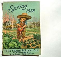 vintage illustration of  Zucchini seeds   Spring 1928 Vegetable vintage seed catalog cover illustration