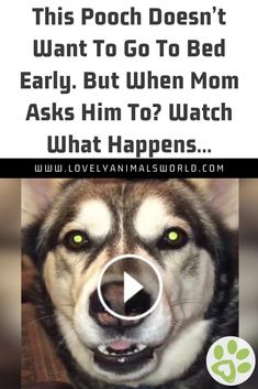 Cute Animal Videos, Funny Animal Pictures, Animal Pics, Cute Funny Dogs, Cute Funny Animals, Daddy Daughter Funny, Bull Mastiff Puppies, Morkie Puppies, Funny Talking Dog