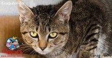 Gatos para Adoção Archives - Página 2 de 3 - .:: Cão Viver ::.