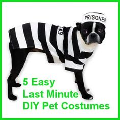 Announcing our new pets category halloween pet costume contest 5 easy diy pet costumes for the last minute procrastinator solutioingenieria Choice Image