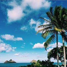 Pin by britni barry on warm vibes синий Tropical Vibes, Tropical Paradise, Summer Vibes, Travel Around The World, Around The Worlds, I Need Vitamin Sea, Videos Tumblr, To Infinity And Beyond, Palm Trees