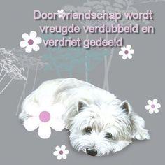 Door vriendschap wordt vreugde verdubbeld en verdriet gedeeld.