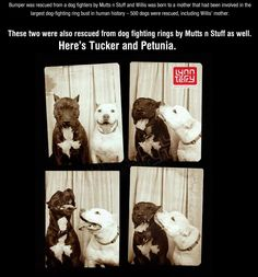 cool-white-pit-bull-dog-photo-booth