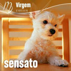 """""""#Virgem #signos #zodíaco ♍"""""""