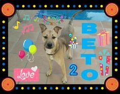 Hoy Cumpleaños el guapetorro de Beto le deseamos muchos mimos y chuches 💞🎈🎂🎉🍗😘💕