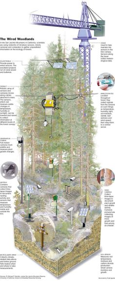 Smart forest: in the San Jacinto Mountains in California, scientists are using networks of miniature sensors, robots, and cameras and computers to gather unparalleled information on the ecology of forests.