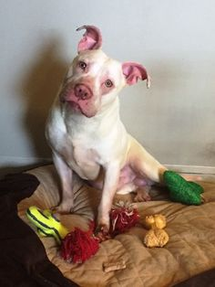 Sparkle was abused before he came to Stray Rescue of St. Louis. He lived in a crate outside, with cinder blocks on top of it. http://strayrescue.org/