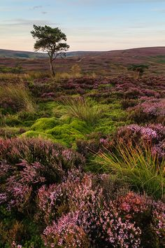 Tell her to reap it with a sickle of leather: Parsley, sage, rosemary and thyme; And gather it all in a bunch of heather, Then she'll be a true love of mine.