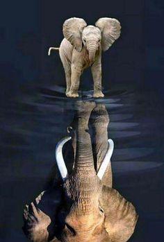 New Tattoo Elephant Skull Awesome Ideas Elephant Pictures, Elephants Photos, Save The Elephants, Animal Pictures, Baby Elephants, Elephant Skull, Elephant Love, Elephant Tattoos, Wild Elephant