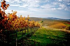 7 California Wine Experiences You Can't Get Anywhere Else - Forbes
