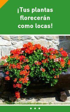 ¡Solo una cucharada de este ingrediente puede hacer que tus plantas florezcan como locas!