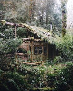 Forest cabin near Seattle, Washington  Photo: Justin-Kauffman