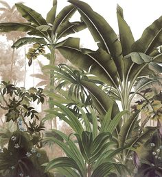 Landscapes - Malabar panel cm - 2 strips of 100 cm - Ultra matte Art Mural, Wall Murals, Wall Art, Botanical Art, Botanical Illustration, Jungle Art, Tropical Wallpaper, Tropical Art, Wall Wallpaper